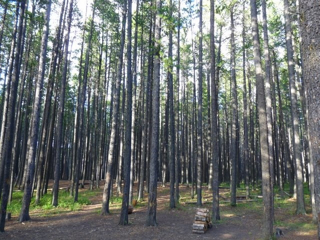Cypress Hills  Lodgepole campgrounds