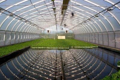 Аквапоника и рыбная (осетровая) ферма в УЗВ.
