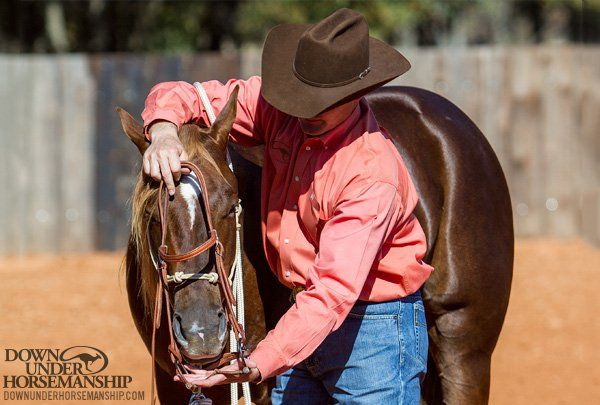 Training Tip: Bridle-Shy Horses – Downunder Horsemanship
