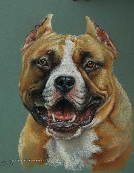 HAPPY DOG PORTRAIT American Staffordshire by CanisArtStudio