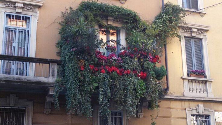 Un balcone fiorito a Milano in Febbraio