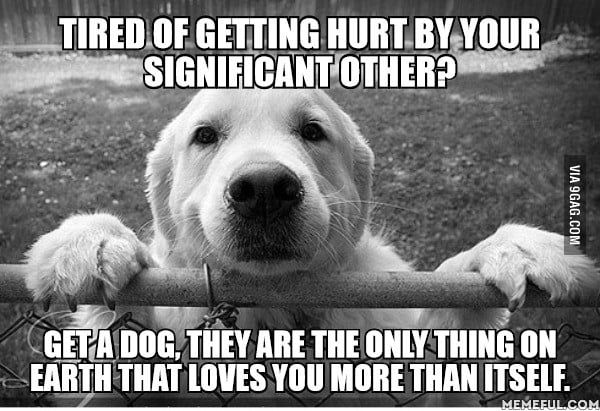 Thorns May Hurt You Friends May Desert You But You Re Never Friendless If You Have A Dog Funny Dog Memes Dog Love Dogs