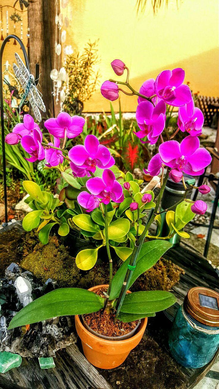 ~2016 Garden ~Orchids blooming in my garden