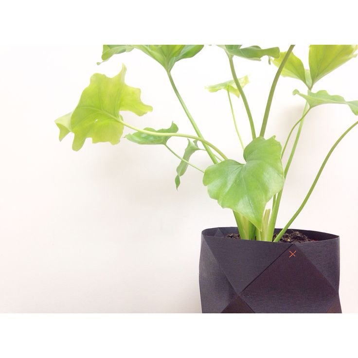 G E O  B U C K E T S   Bring your home to life with plants SHOP   www.daisychainstore.com.au  FREE TOTE BAG WITH EVERY PURCHASE