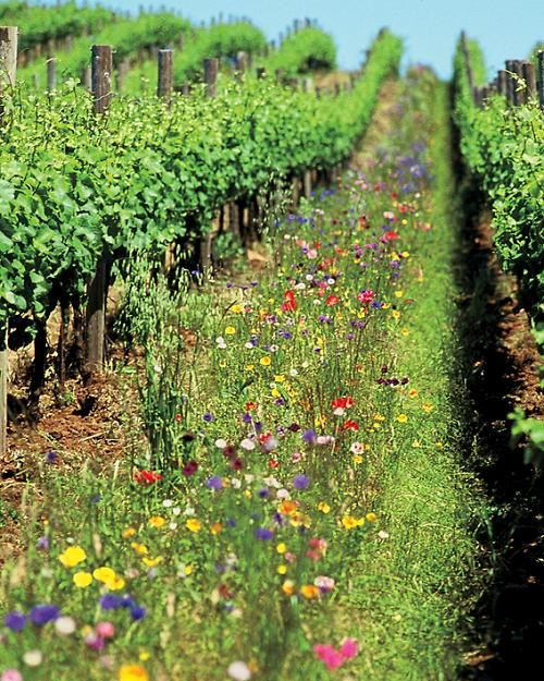 Eco-Friendly Wineries