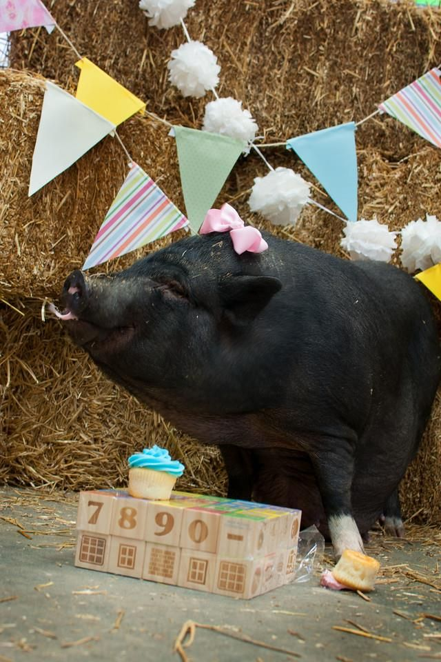 This Mama Pig Was Abandoned ... But Now, She's Got a Sanctuary Home and a Maternity Shoot! (PHOTOS)
