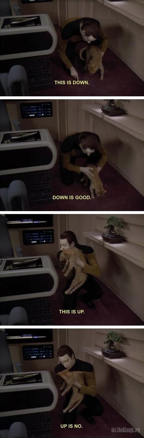 How to train your cat according to Data from Star Trek: The Next Generation