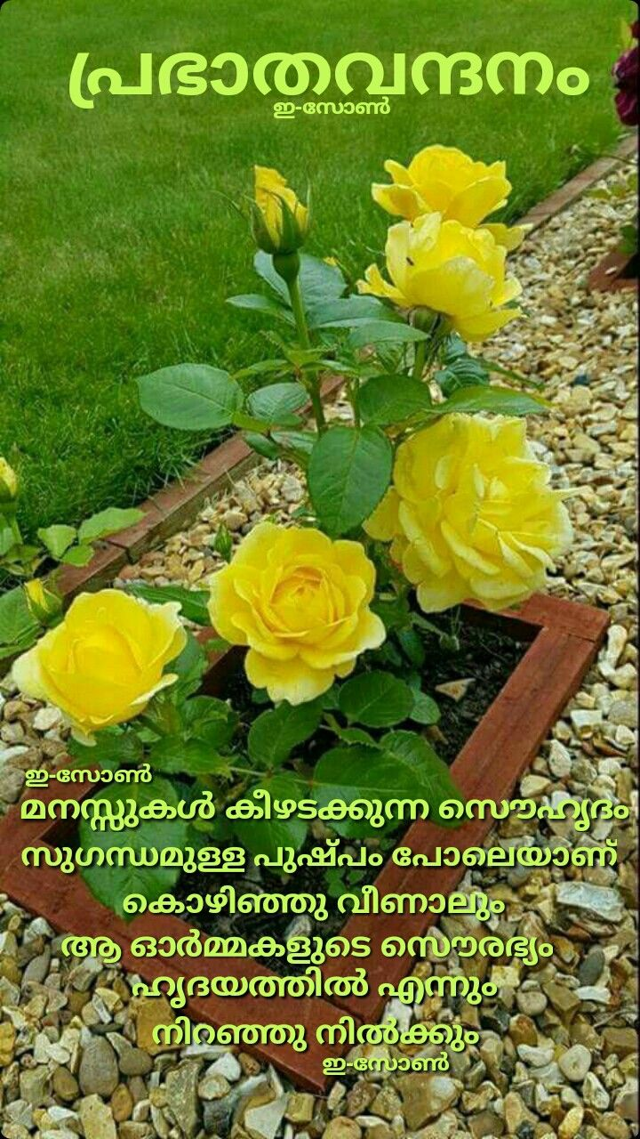 Pin By Prabhakaran Velath On Good Morning Malayalam Cute Good Morning Quotes Good Morning Monday Images Good Morning Wishes
