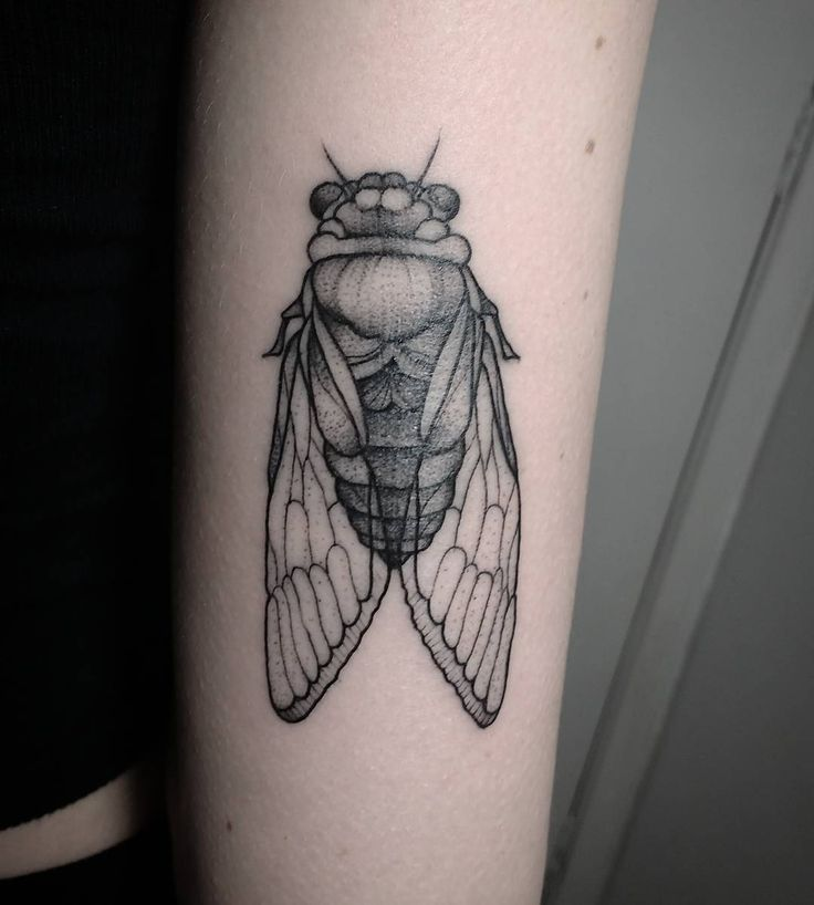 Tattoo Cigarra / Cicada tattoo Tattoo de Inseto / Insect Tattoo