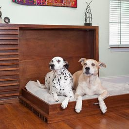 murphy dog bed, I like the idea