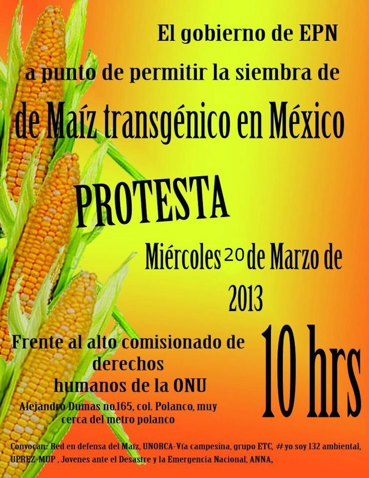 protesta contra el maiz transgenico