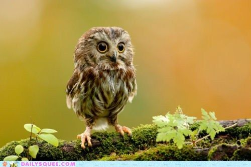 cute animals - Who? Who Said That?
