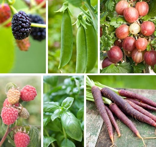 Vysněná zahrada: Co se (nám) vyplatí pěstovat