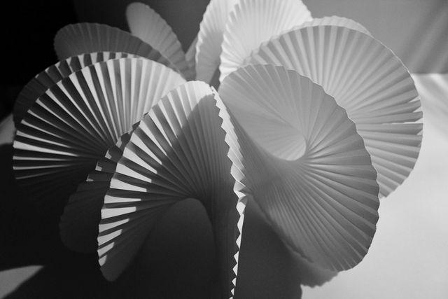 Echinoidea XII - III - MMXIII   Flickr - Photo Sharing!
