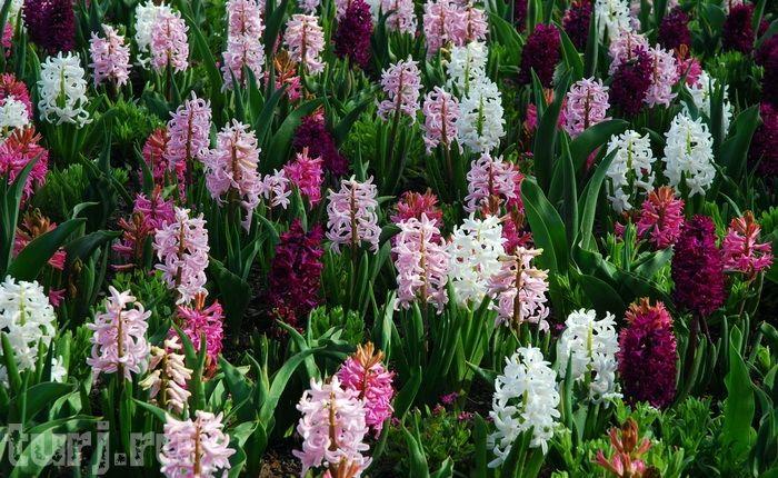 Канада, Британская Колумбия, Виктория, Сады Будхарт, Ванкувер, сады мира, самые красивые сады, достопримечательности Канады
