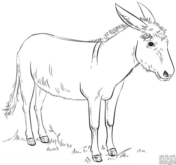 How to draw a donkey | Step by step Drawing tutorials