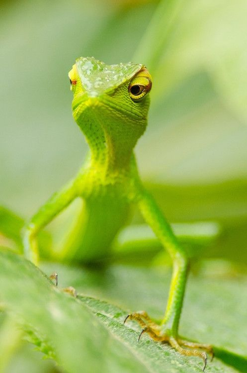 the-cute-creatures:  (via 500px / Green by cantay gok) Click here for more cute creatures!