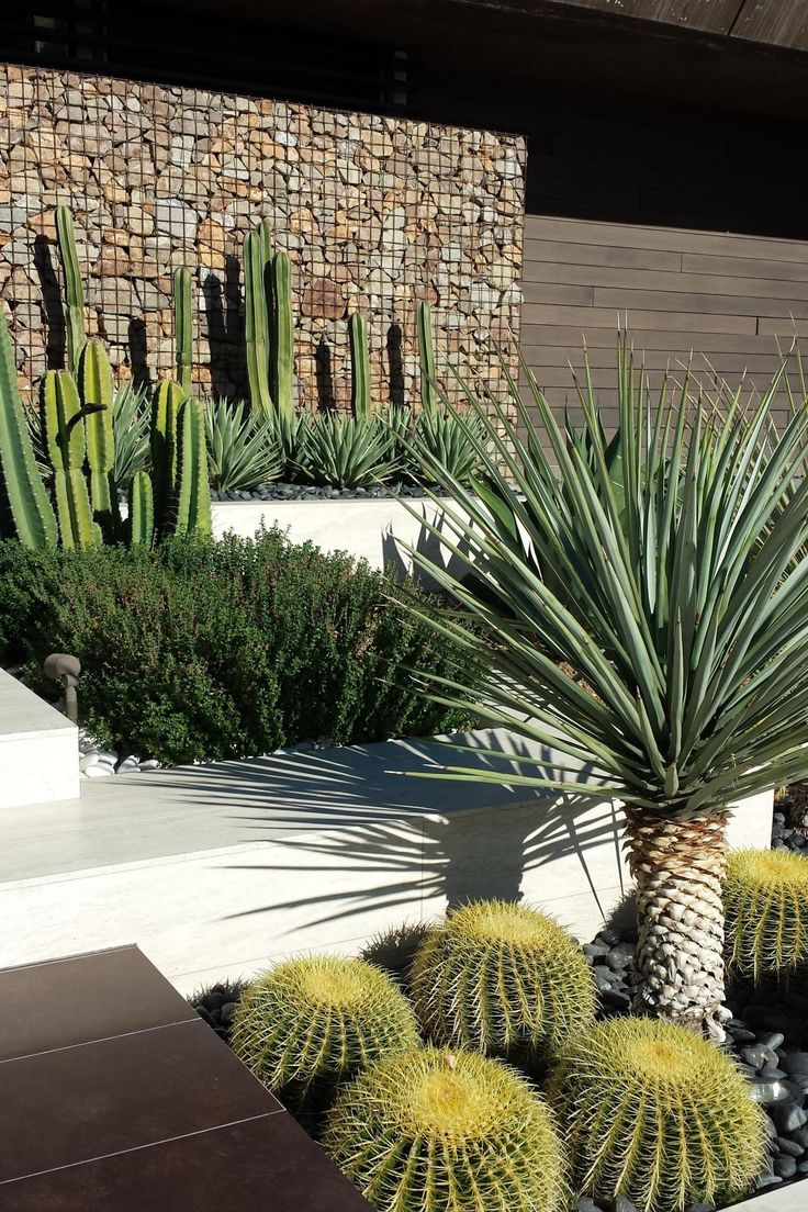The gabion wall that has been added to this garden gives it extra dimension and makes the plants stand out against the natural brown.