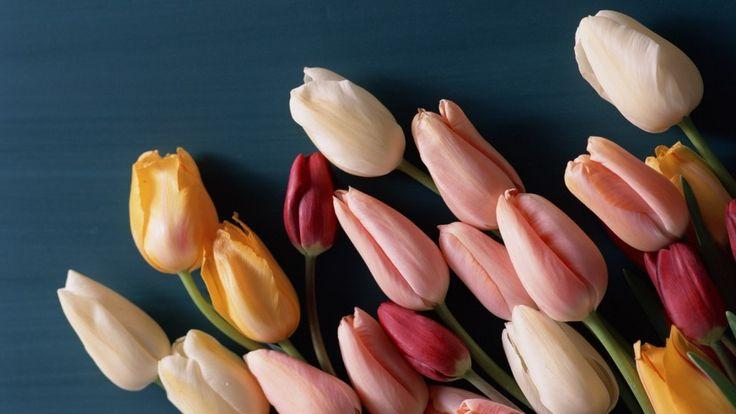 Tulips CLosed Petals