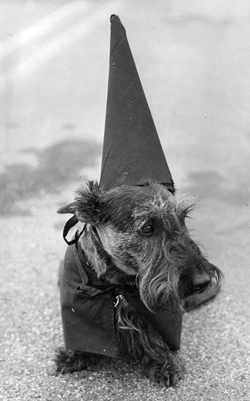 "Photograph caption dated June 31, 1962 reads, ""Capt. Biffington won trophy."" Capt. Biffington is graduating from the Panorama City Obedience Club. He is a male Scottish terrier."