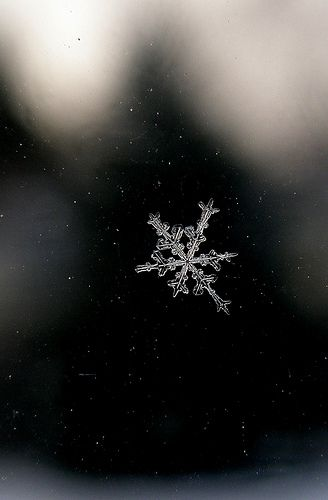 snow flake by igoy, via Flickr