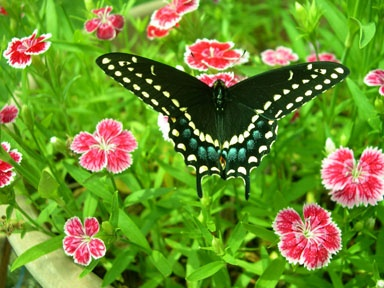 Gorgeous Butterfly And Flowers Gardening And