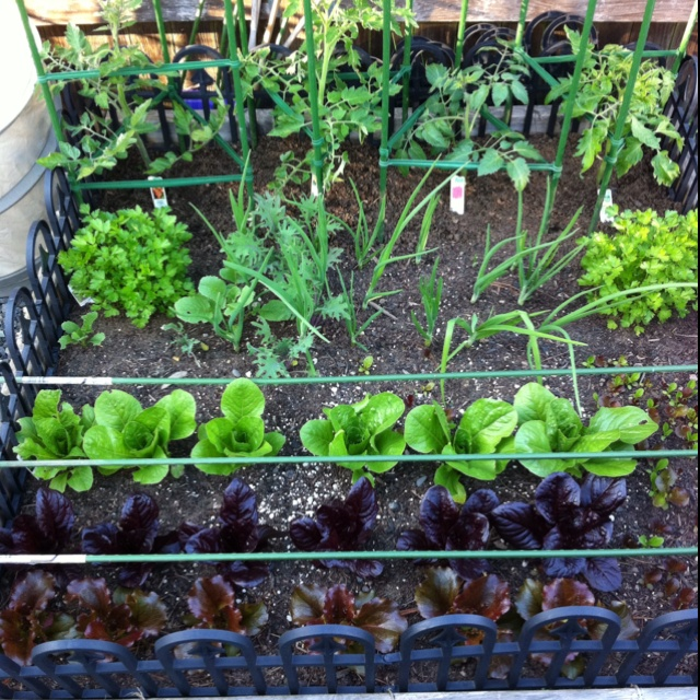 17 Best Images About Gardening Tips And Ideas On Pinterest: 17 Best Images About Square Foot Gardening On Pinterest
