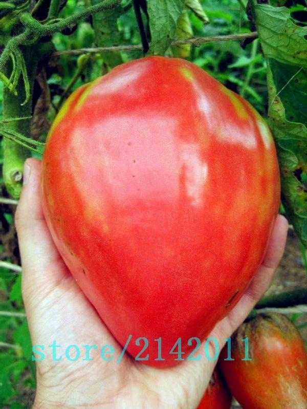 家宝ジャイアント赤いトマト種子、ストロベリートマト種子、プロフェッショナルパック、100種子/パック、有機野菜植物のためのホームガーデン