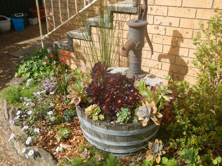 A mix of Australian native plants and succulents thrive in this very dry area of the garden with a full westerly aspect