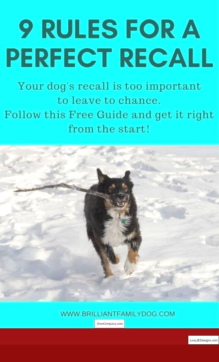 Training Tips For Dog On Dog Aggression And Pics Of Best Way To
