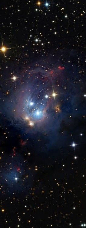 ♥ NGC 7129 Is A Rosebud-shaped Reflection Nebula located 3300 ly away in the constellation Cepheus. A young open cluster is responsible for illuminating the surrounding nebula.