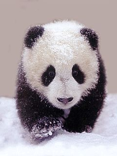 3D Gif Animations - Free download i love you images photo background screensaver e-cards: animals panda in snow animated gif images mobile p...