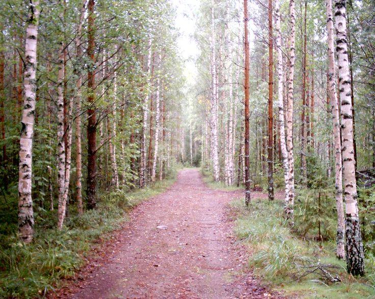 Finland Mikkeli Hirvensalmi path through forest near Metsalampi Pond trees with lichen grass