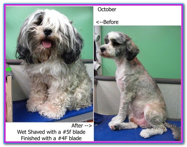 How Long Does It Take To Learn To Groom Dogs Love Dogs And Can T