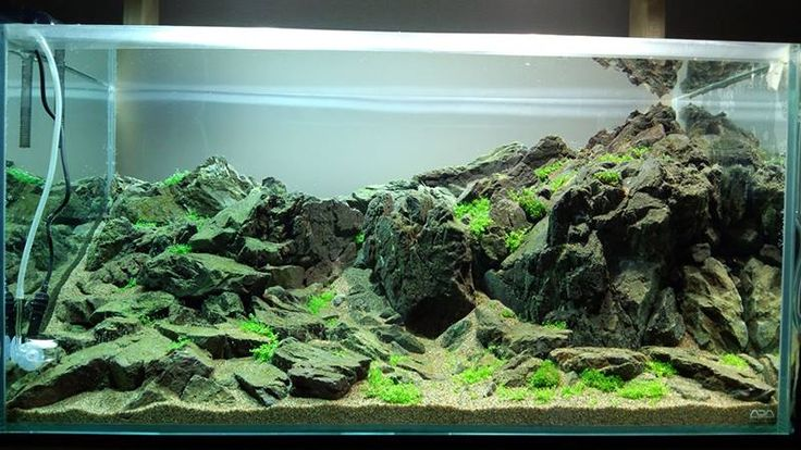 17 best images about freshwater inspiration on pinterest for Landscaping rocks for aquarium