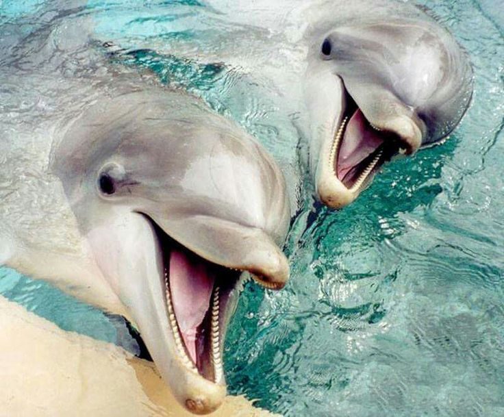<3 dolphins!