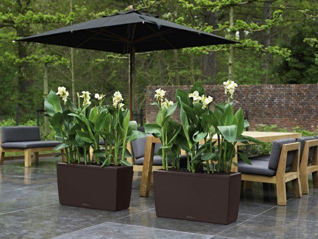 Klasyczna elegancja, będąca znakiem rozpoznawczym ekskluzywnych donic Lechuza, łączy się w modelu Cararo z nowoczesnym, uniwersalnym wygladem. Donica znajdzie zastosowanie nie tylko w domu, ale również na tarasach ogrodowych – świetny wybór dla osób kochających rośliny, jednak nie mających czasu na ich regularne podlewanie.  http://www.sklep.gardenplanet.pl/gp,d575,1,pl.html