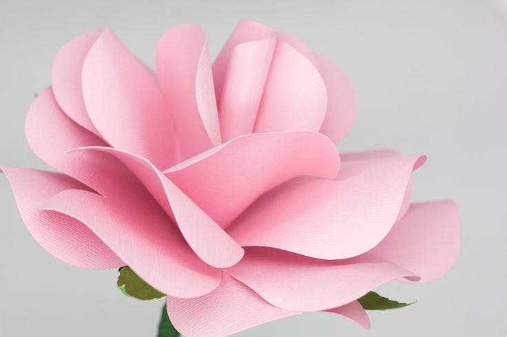 Bouquet rosa  Bottoniera uomo   #bouquetrose #bouquet #bouquetsposa #bouquetalternativi #unusualbouquet