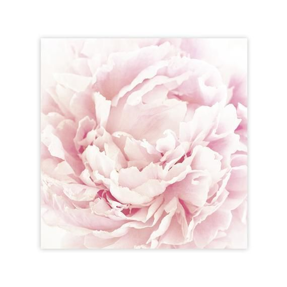 Hypnotic Pink Peony Wall Art Framed Sizes Up To 36x36 Pink Peonies Art Peony Art Peonies Artwork