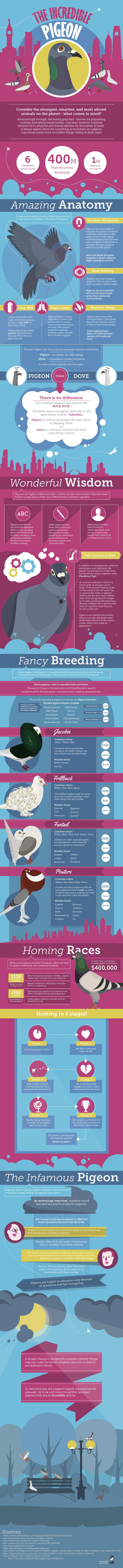 The Incredible Pigeon #Infographic #Birds #Pigeon