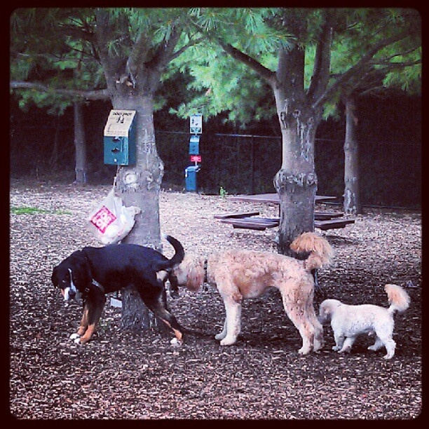 Want to bring your dog somewhere where he/she can roam free? Brings your kids too! Franklin, MA - Franklin Dog Park