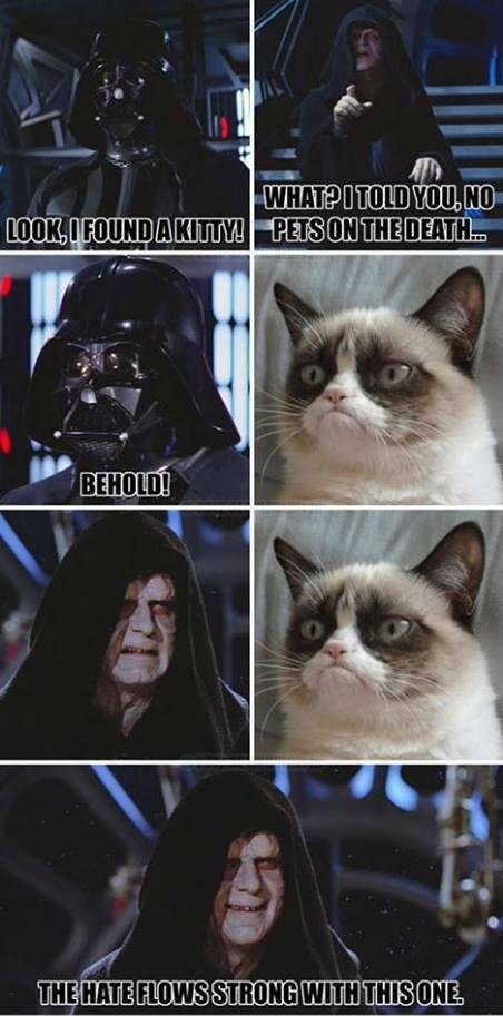 Grumpy cat darth vader, Grumpy cat star wars, grumpy cat funny, grumpy cat humor ...For the funniest memes and hilarious jokes visit www.bestfunnyjokes4u.com/lol-funny-cat-pic/