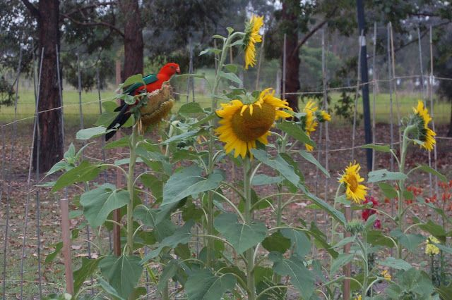 Amongst Gum Trees: Bird feeders