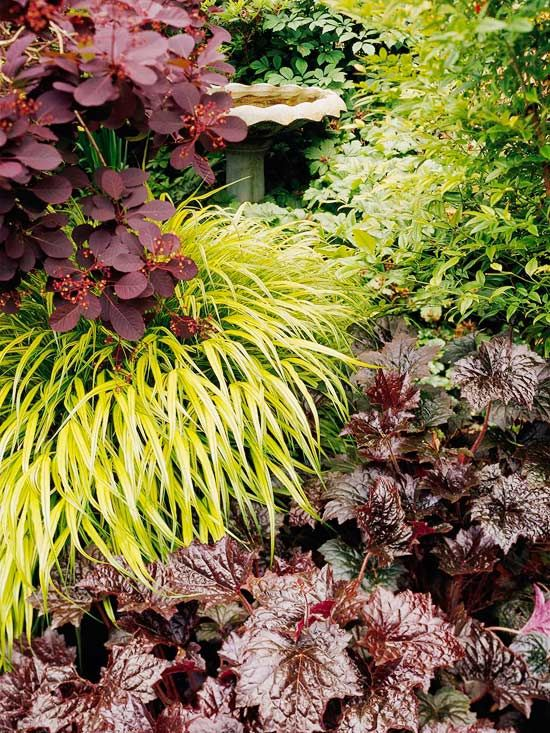 Shade plants, Japanese Forest Grass under Purple Smokebush and above heuchera