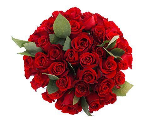 50 Freedom Farm Fresh Red Roses Bouquet By JustFreshRoses  Long Stem Fresh Red Rose Delivery -- Want additional info? Click on the image.