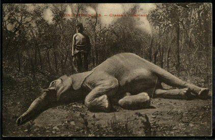 54 Best King Leopold Images On Pinterest King Leopold
