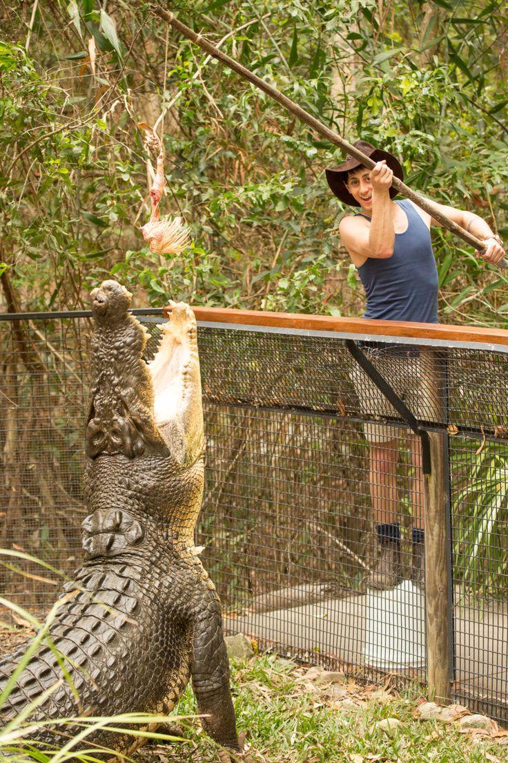 Outback Matty feeding crocodiles in Cairns