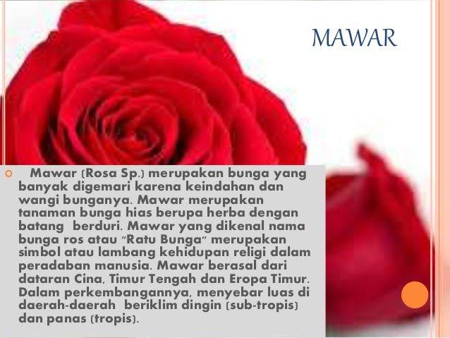 Wow 26 Gambar Bunga Mawar Lengkap Dengan Akar Powerpoint Bunga Mawar 8 Cara Menanam Bunga Mawar Yang Telah Dipetik Dengan M Di 2020 Mawar Bunga Beauty And The Beast