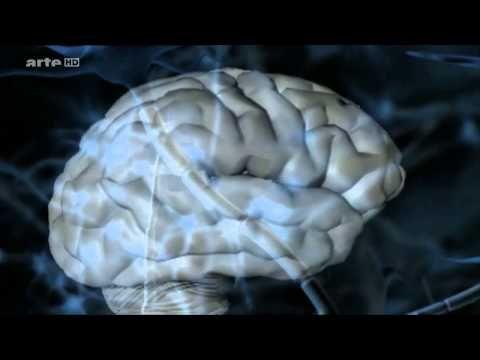 Arte: Nonverbale Kommunikation - Das Geheimnis der Körpersprache - YouTube