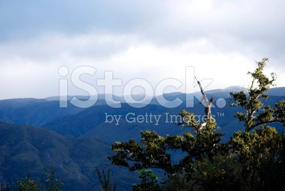 Podocarp and Mountain Scene, New Zealand royalty-free stock photo